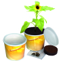 Sunshine 2Go, mini-sunflower, incl. 1-4 c digital printing