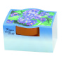 Terracotta Pot Forget-me-not, incl. 1-4 c digital printing