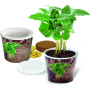 Coffee 2Grow, coffee, incl. 1-4 c digital printing